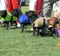 dog cool coats